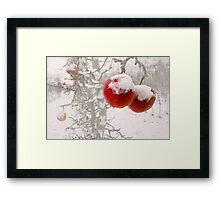 Winter Apples Framed Print
