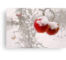 Winter Apples Canvas Print