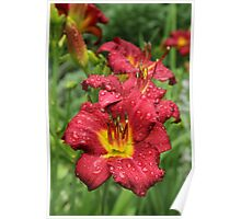 Garden of Daylilies Poster