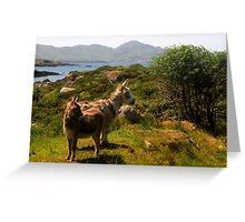 Scruffy donkeys Greeting Card