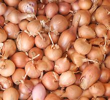 Red Onions by GysWorks