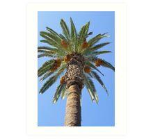 Date Palm Tree Art Print
