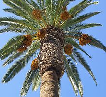 Date Palm Tree by GysWorks