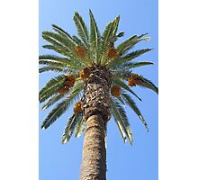 Date Palm Tree Photographic Print