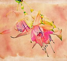 Dancing In the Breeze - Fuchsia Blossoms by MotherNature2