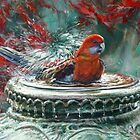 autumn red - Crimson rosella by steve morvell