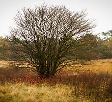 Heathland autumn symphony by steppeland