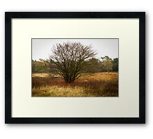 Heathland autumn symphony Framed Print