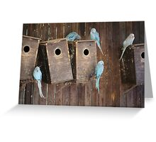 Indian Ringneck Parakeets at World of Birds South Africa Greeting Card