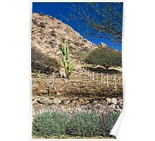 Cactus in the Vineyard Poster