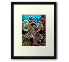 MOTTLED MANTLE MATRIX Framed Print
