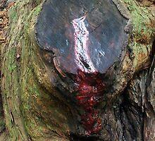 The Bleeding Yew by Yampimon