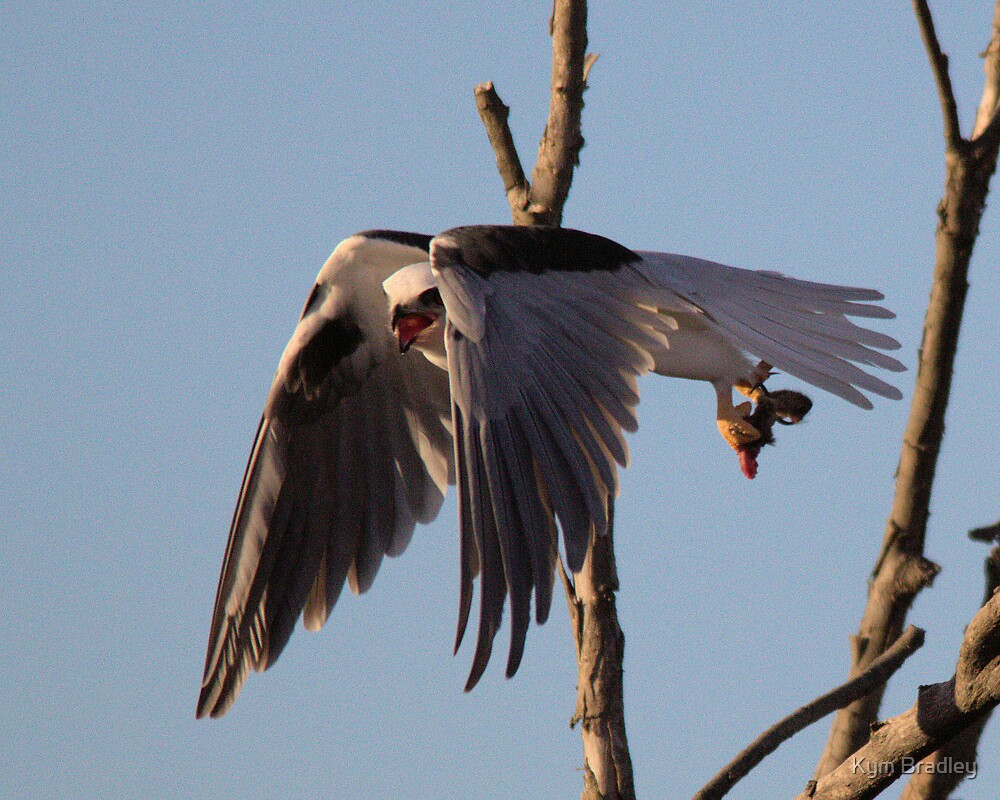 Dine and Dash Black Shoulder Kite with Mouse by Kym Bradley