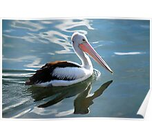 pelican reflections Poster