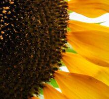 Sun & Seed Sticker