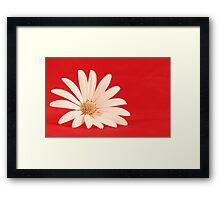 White flower in red background Framed Print