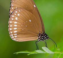 Beautiful world of butterflies by Nicole W.