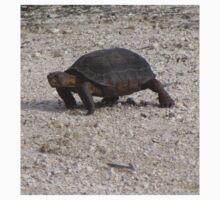 Desert Tortoise Baby Tee