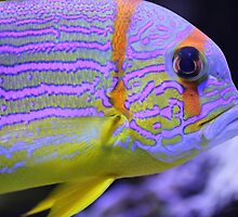 Colorful fish by gianliguori