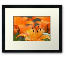 Stand Out And Be Noticed! Framed Print