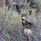 White -Tailed Doe by Jan  Tribe