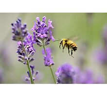 Lavender Approach Photographic Print
