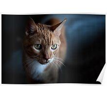 Cat Debonair Poster