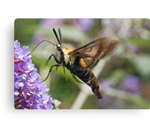 With See Through Wings Canvas Print