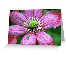Bug hopper on clematis Greeting Card