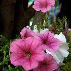 California Petunias by Karen Harrison