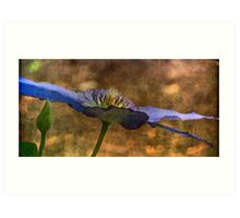 A different perspective of clematis Art Print