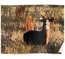 Buck2 Poster