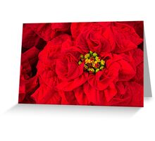 The Christmas Rose Greeting Card