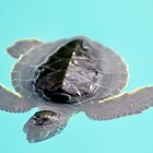 baby sea turtle by Irina93