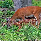 Mama deer with twin fawns by kutekatgurl