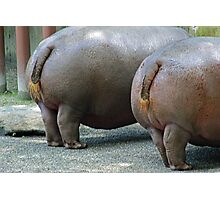 Hippo Hooplah Photographic Print