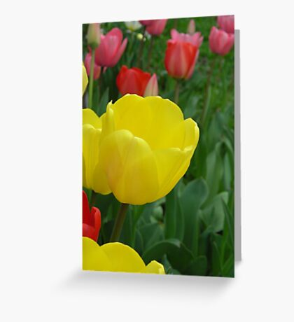 Tulips! Greeting Card