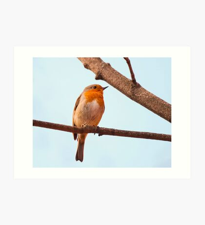 Erithacus rubecula, red chest bird, on a branch Art Print