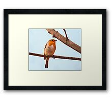 Erithacus rubecula, red chest bird, on a branch Framed Print