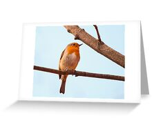 Erithacus rubecula, red chest bird, on a branch Greeting Card
