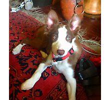 Lola! Photographic Print