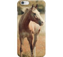Appaloosa Horse iPhone Case/Skin