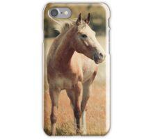 Appaloosa Horse iPhone Case/Skin
