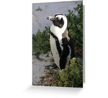 False Bay Penguin South Africa Greeting Card