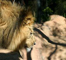 African Lion by Henrik Lehnerer