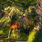 Deer Enchanted by JamesA1