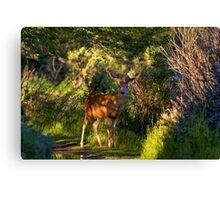 Deer Enchanted Canvas Print