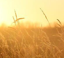 Golden Grasses by Kathi Arnell