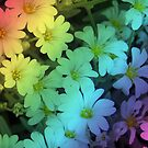 1711-multicolor lilys by elvira1