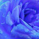 Blue Rose by dedakota